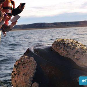 avistaje ballenas de puerto madryn