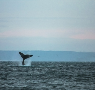 Muy cerca de las ballenas en Puerto Pirámides